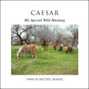 CAESAR, My Special Wild Mustang by Hwa-Ja Rachel Marks